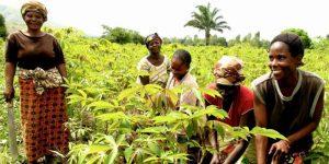 L' agriculture...  Appui à la Sécurité alimentaire (achat de terrains, achats...